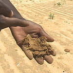 Drought has turned farmland into useless soil. A farmer examines the soil in drought-stricken Niger during the 2005 famine.