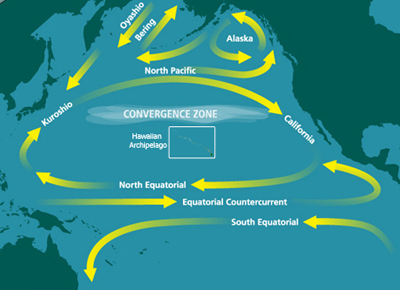 The patch is created in the gyre of the North Pacific Subtropical Convergence Zone. North Pacific Subtropical Convergence Zone.jpg