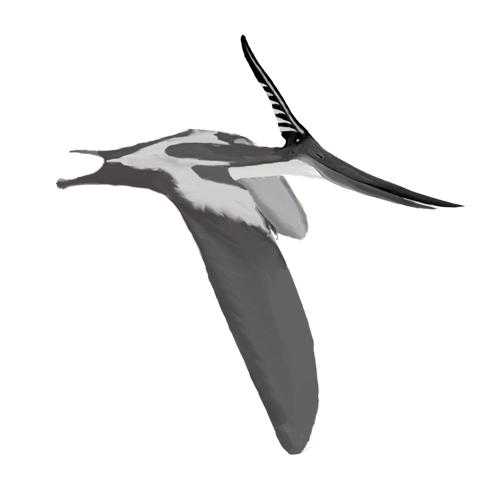 Pteredon Crest