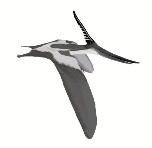 File:Pteranodon longiceps mmartyniuk wiki.png