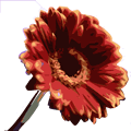 RedFlower.png