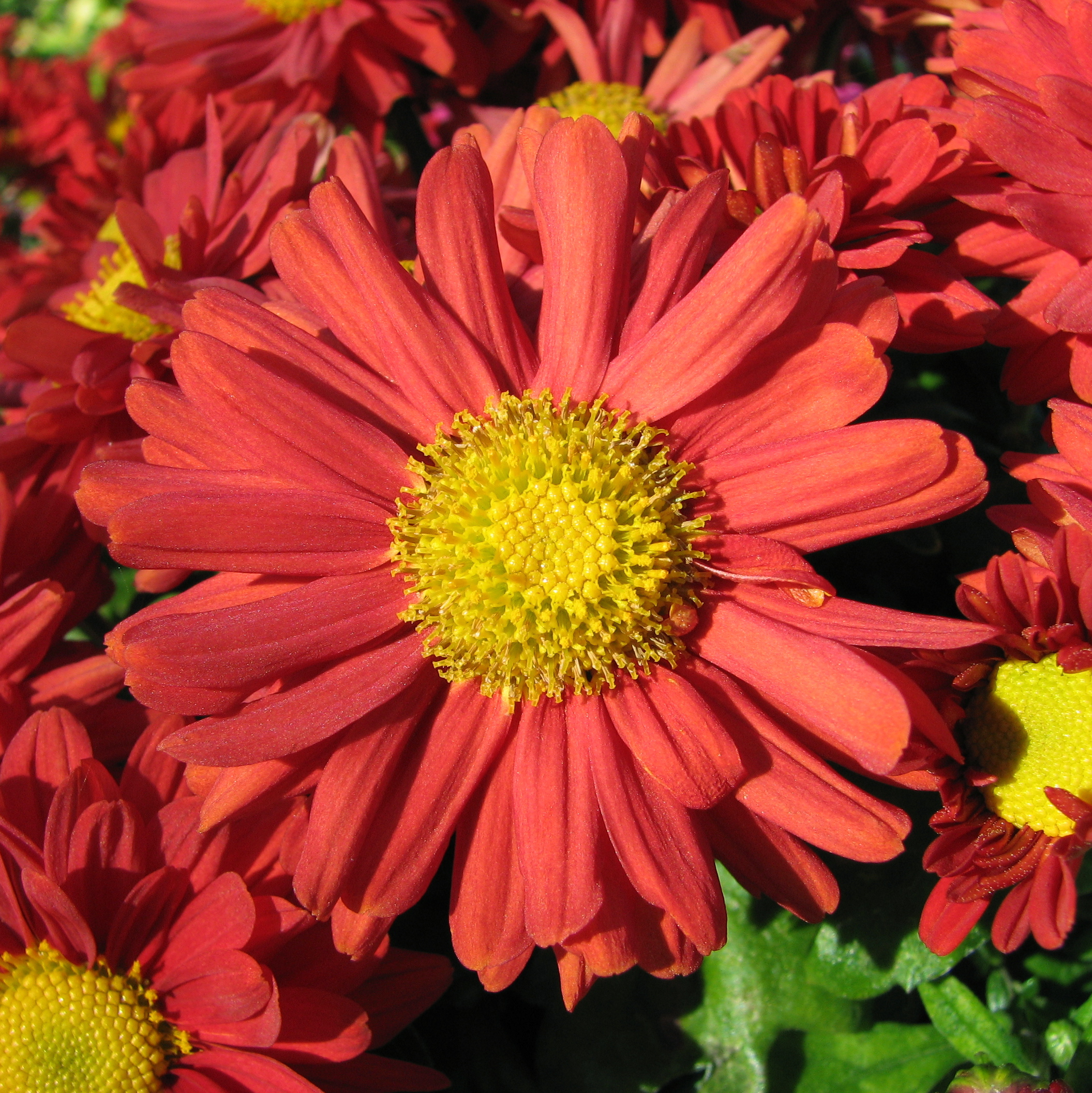 39 Sunday 39 S Child 39 Lives At Annie 39 S House Birth Flowers And