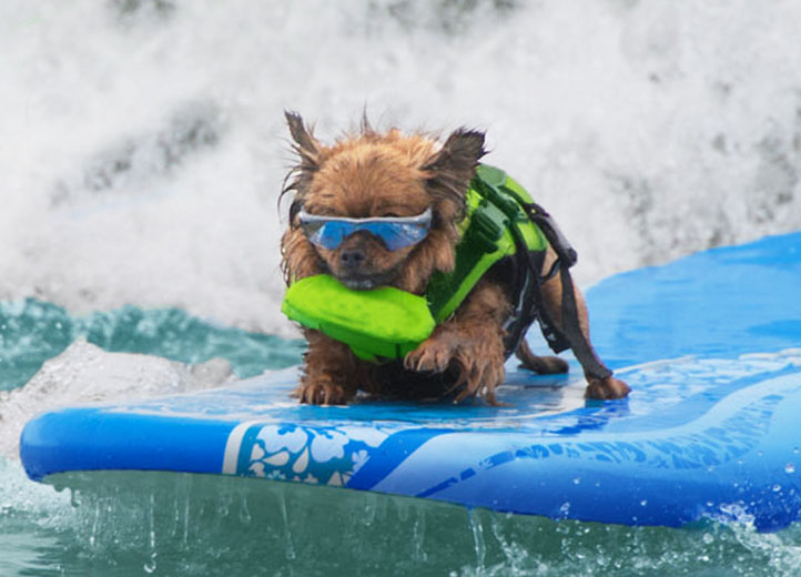 Dog Boarding In Honolulu Hawaii