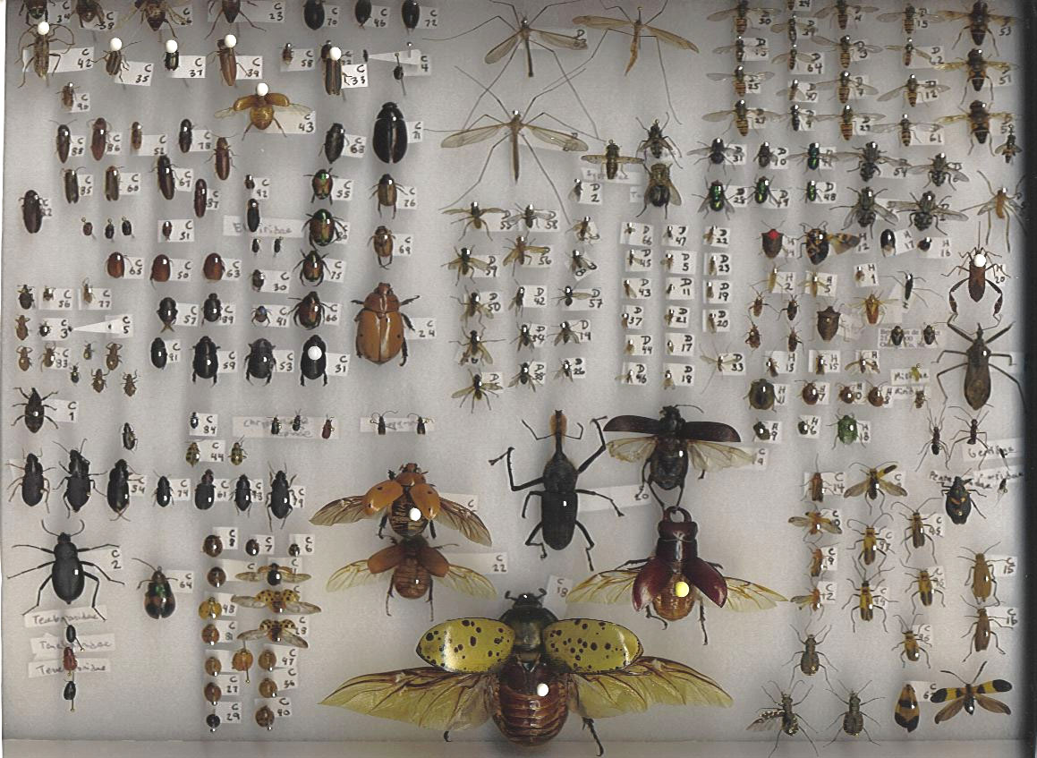how to make an insect collection