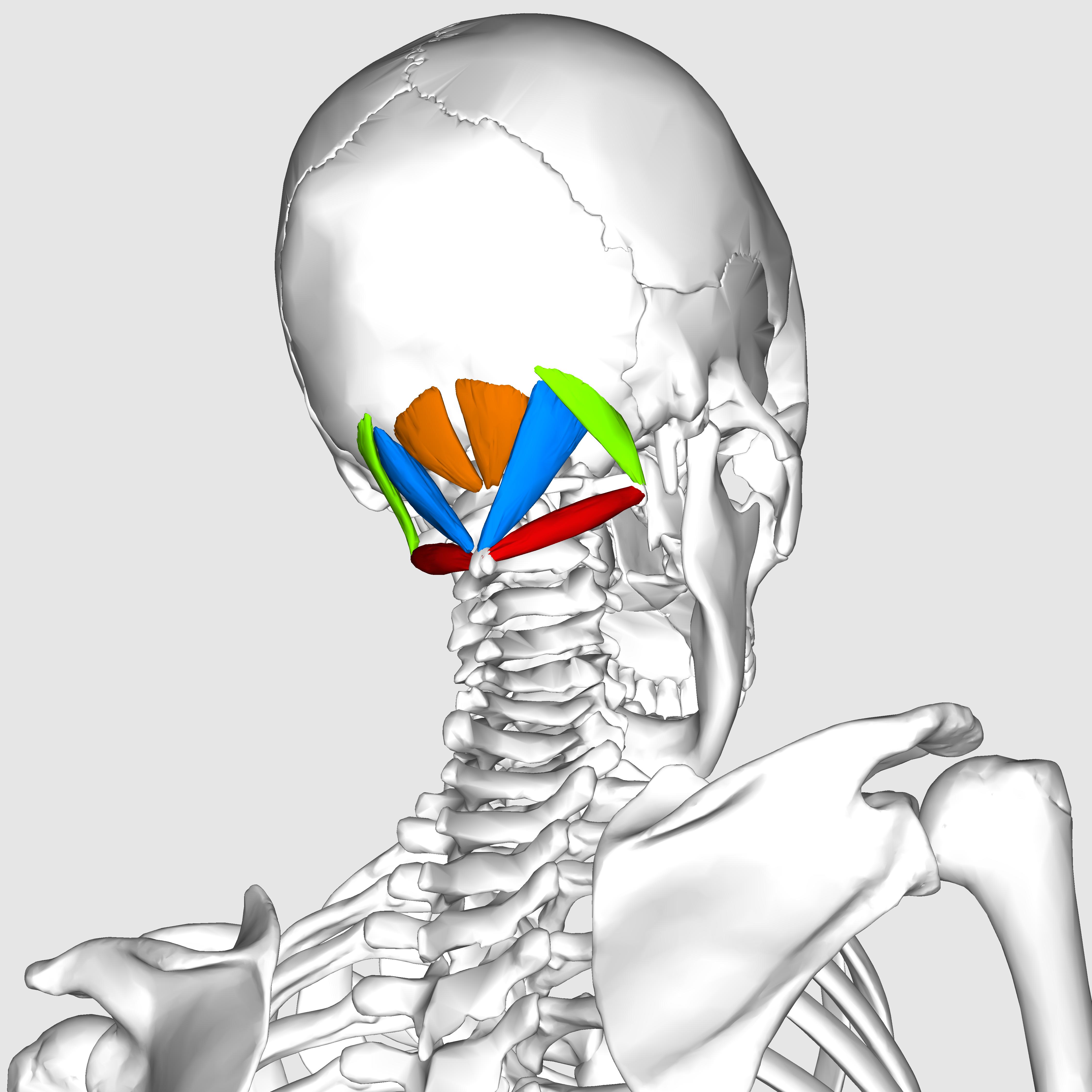 Wat Is suboccipitale Neuralgie  kennis  deadreigncom