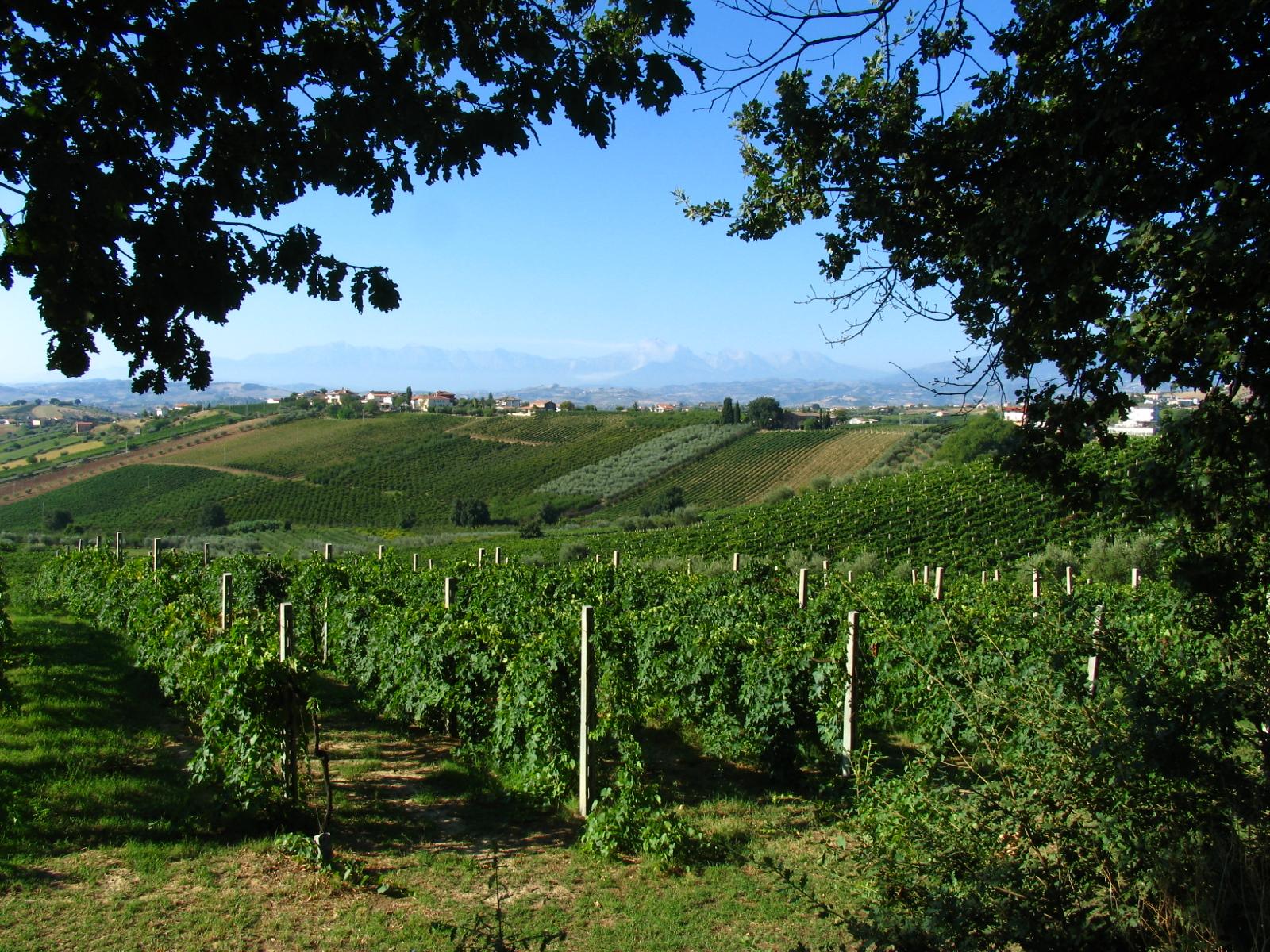 Italian wine wikipedia for The italian