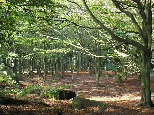 Woodland on Otley Chevin - geograph.org.uk - 260336