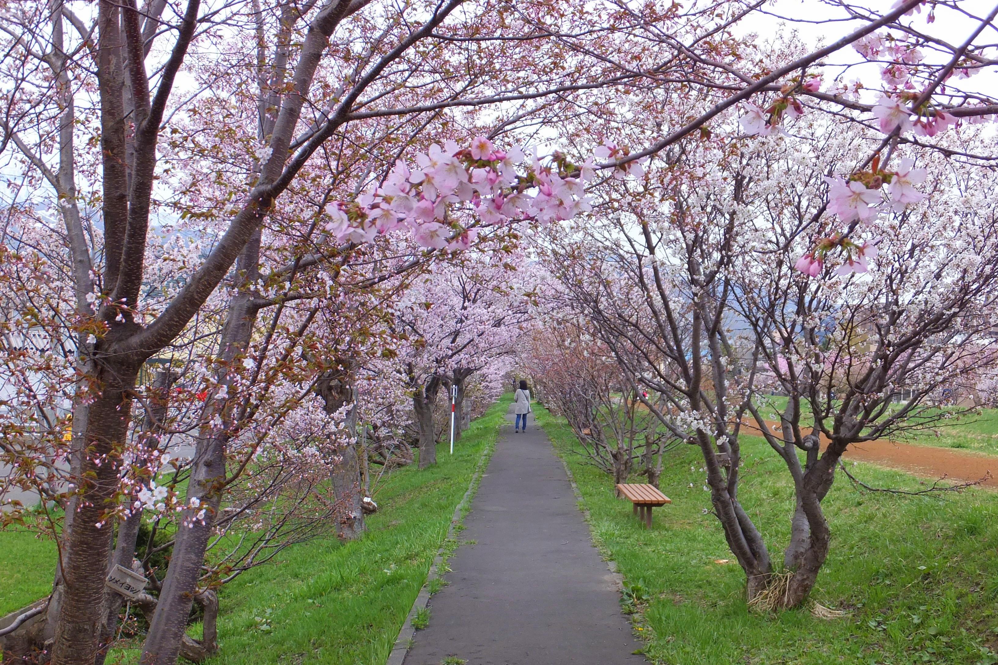 ファイル 軽川河川敷 garu river riverbed panoramio jpg wikipedia
