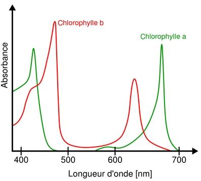 Absorption_spectrum_of_chlorophyll_a_and_b.jpg