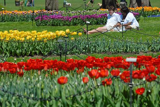 tulip festival wikipedia - Tulip Garden Near Me
