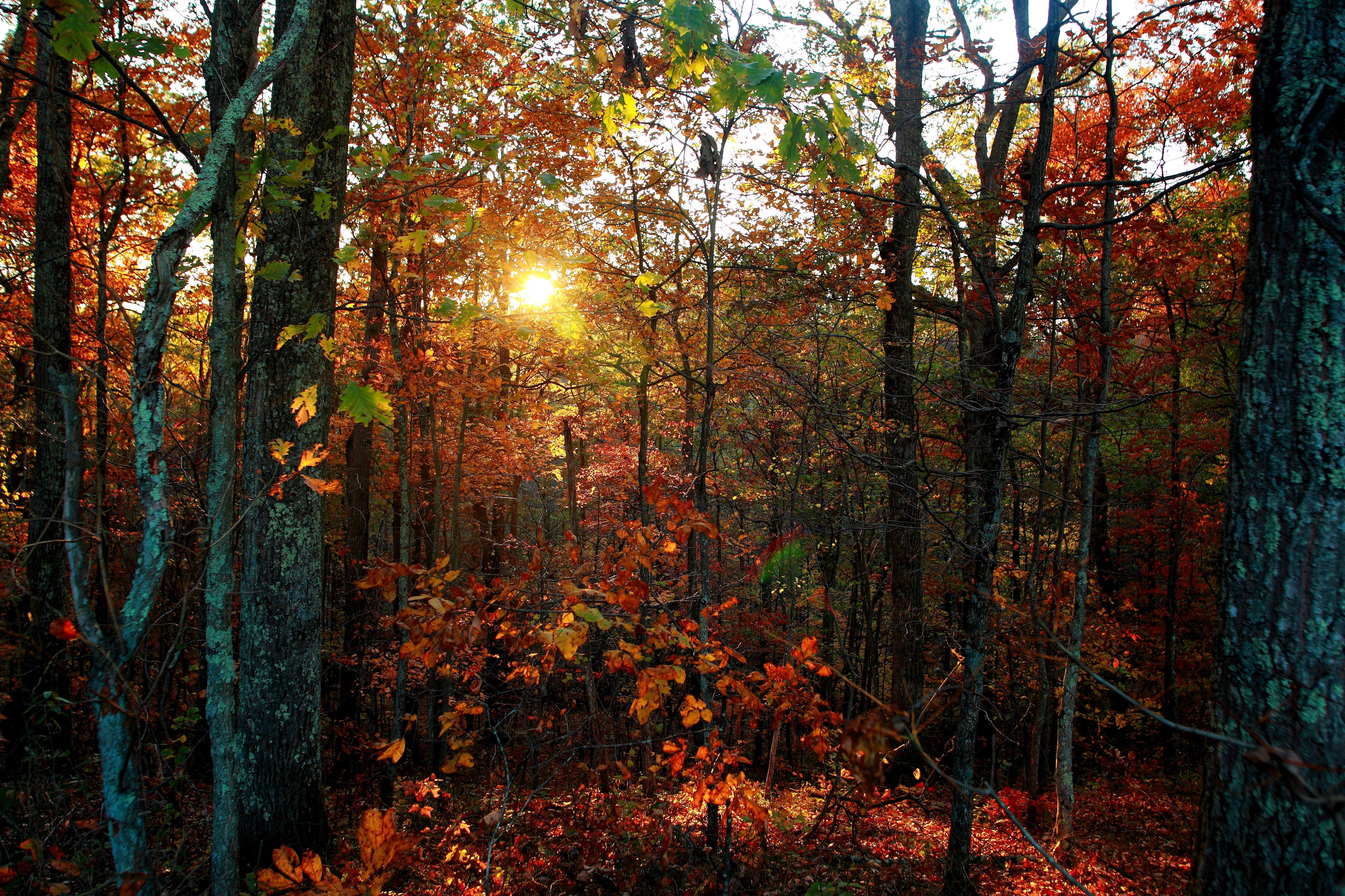 Ficheiro Autumn Trees Leaves Foliage Sunset West Virginia Forestwander Jpg Wikipedia A Enciclopedia Livre
