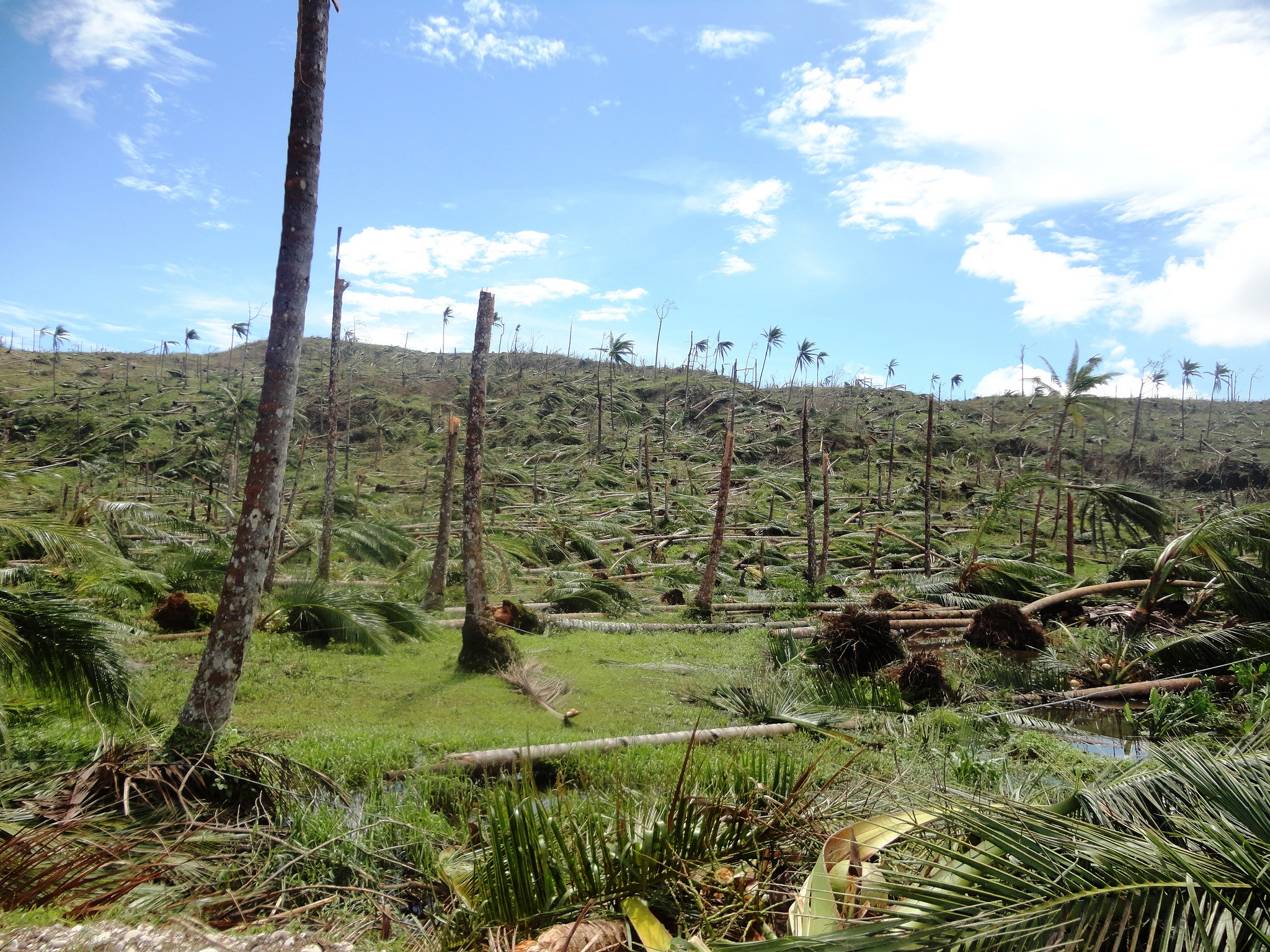 File:Deforestation in the wake of Typhoon Bopha in Cateel ...