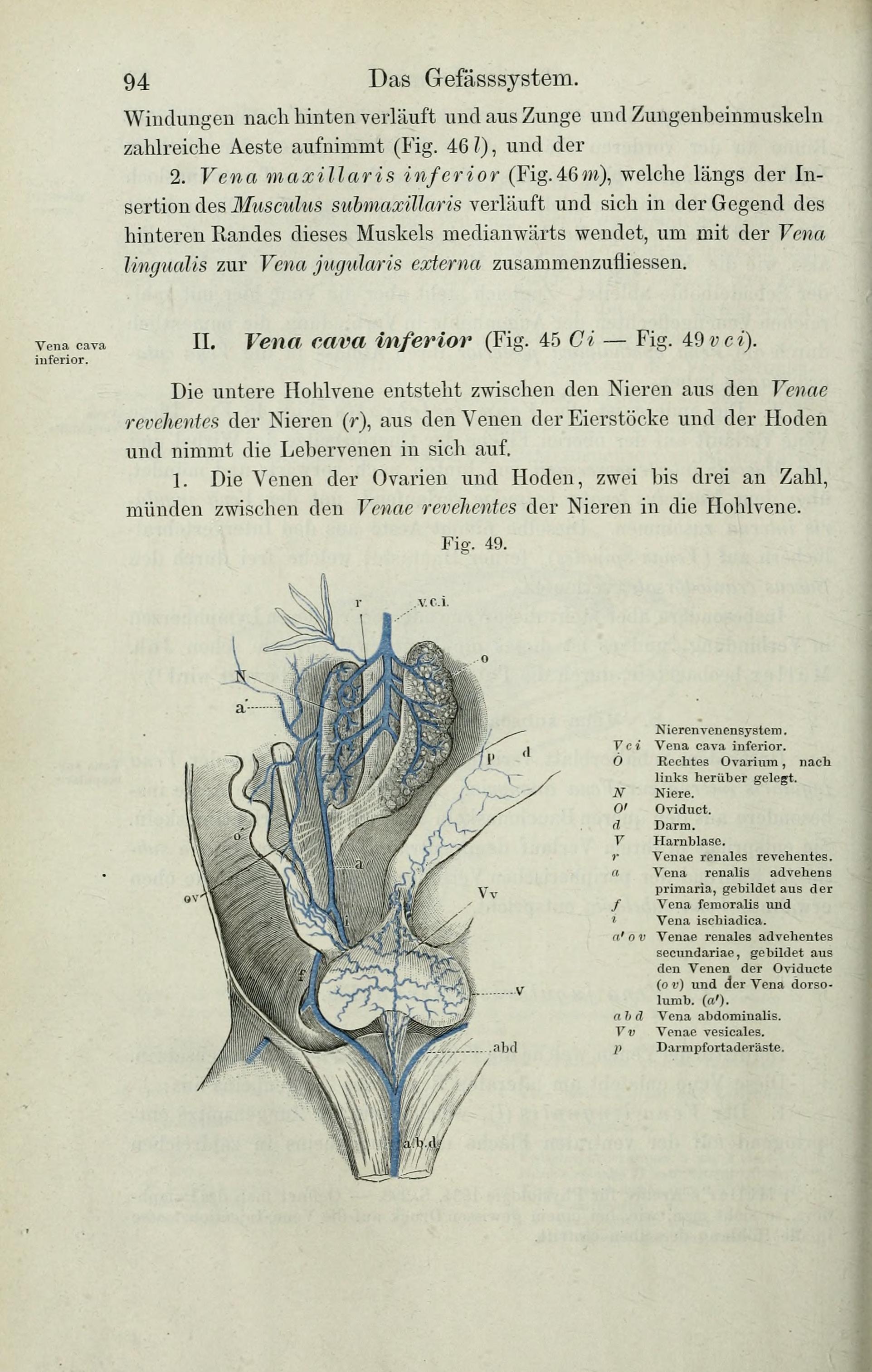 File:Die Anatomie des Frosches (Page 94) BHL33481711.jpg - Wikimedia ...