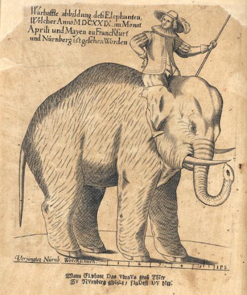 Bild des Elefanten, der im April und Mai 1629 Frankfurt besucht hat