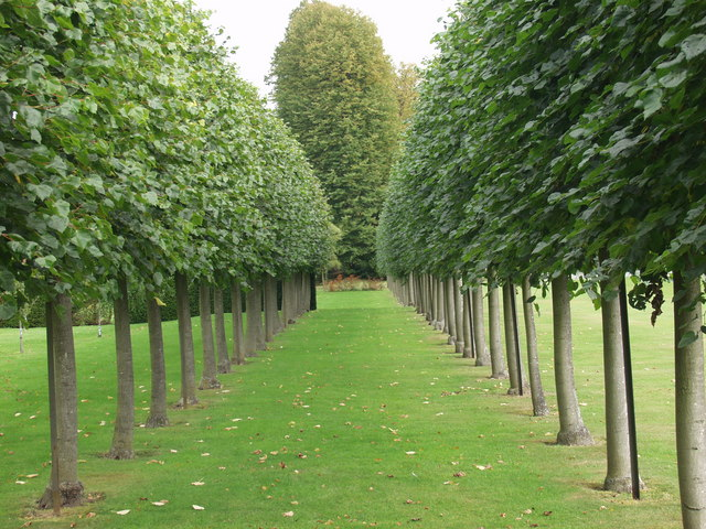 File espalier trained plane trees in erddig house gardens for House garden trees