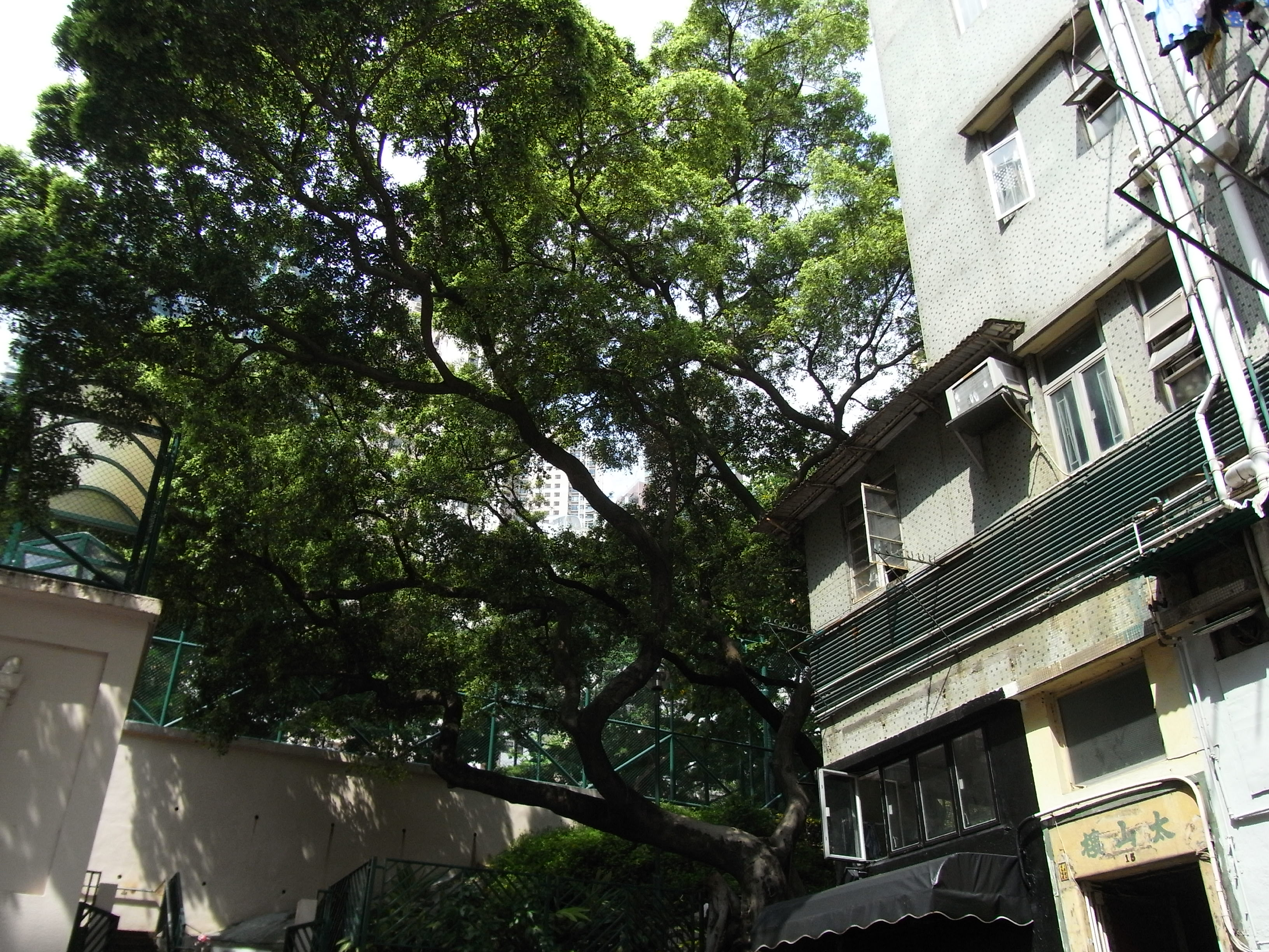 File:HK Sheung Wan 15 Upper Station Street Tai Shan House N Blake Garden  Banyan