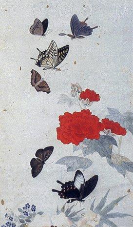 File:Korea-Nam Gyewoo-Butterflies-03.jpg