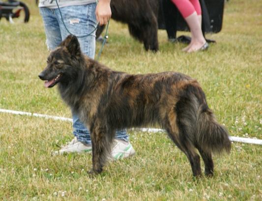Long Coat Dog Breeds