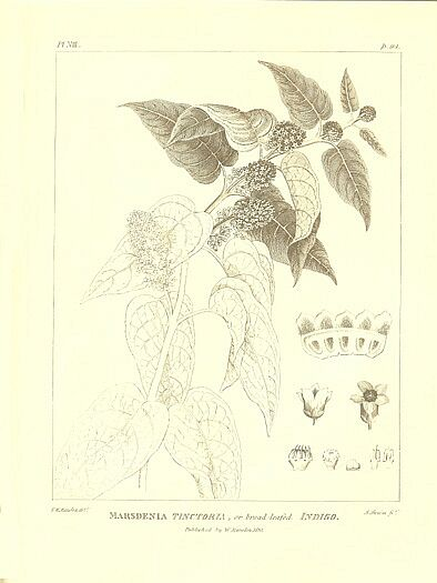 the history of sumatra project gutenberg tattoo design bild
