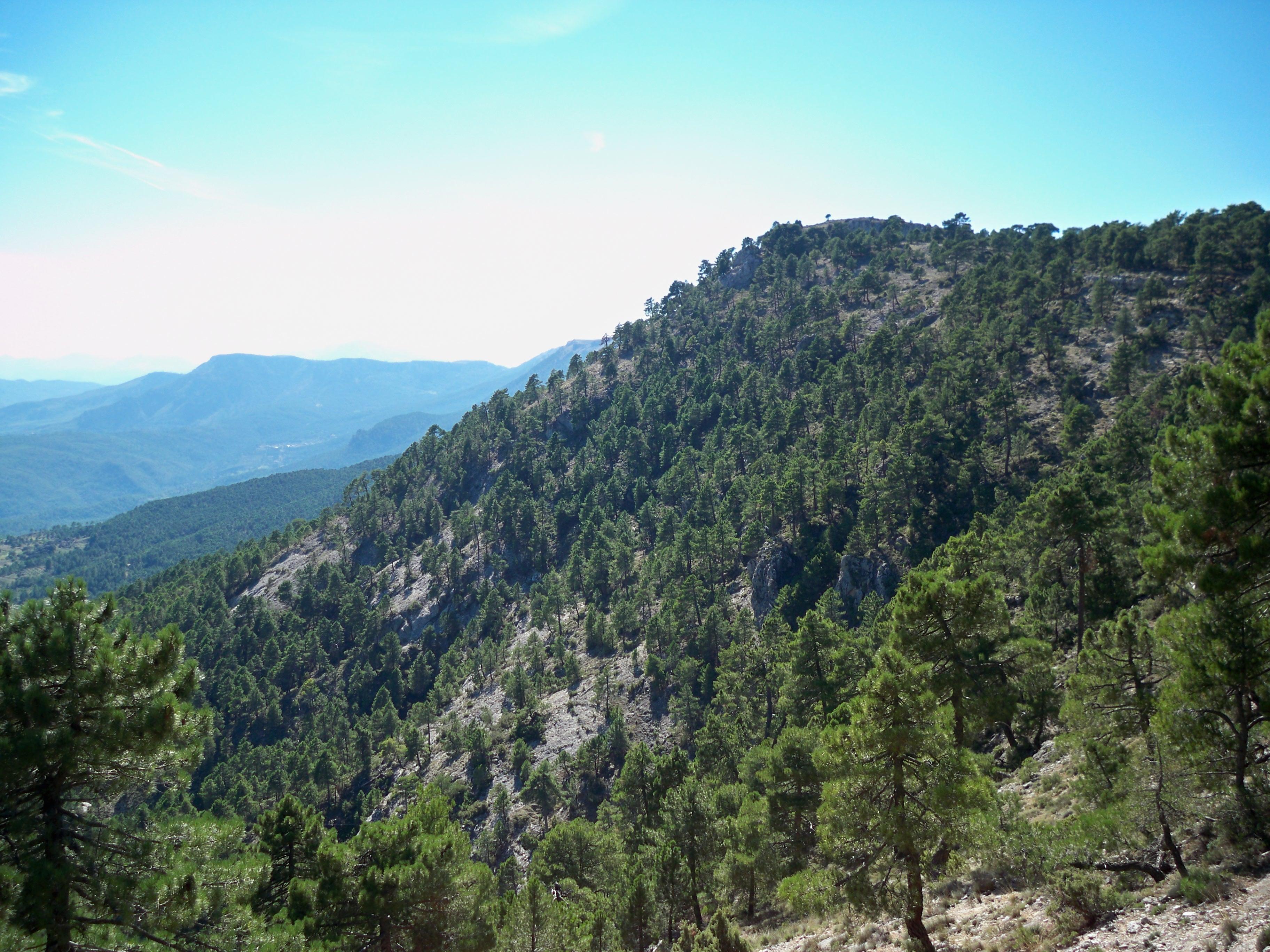 File:Monte de pinos en...