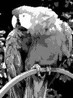A Photograph Of Parrot Rendered With Monochrome Palette Limited Number Shades