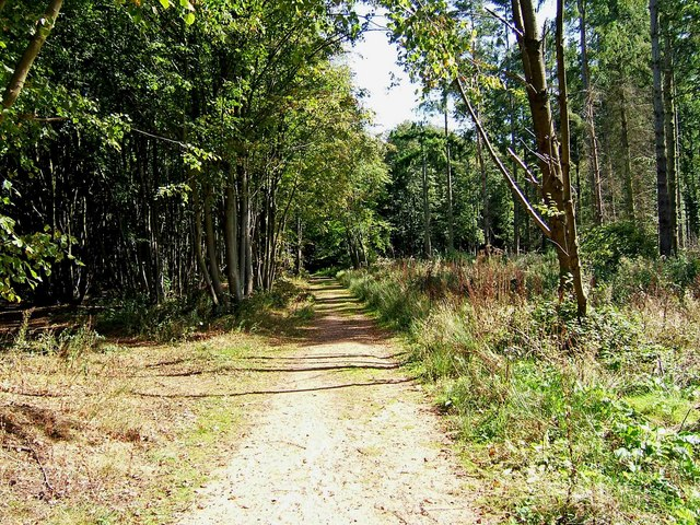 Path through Shrawley Wood - geograph.org.uk - 1484935
