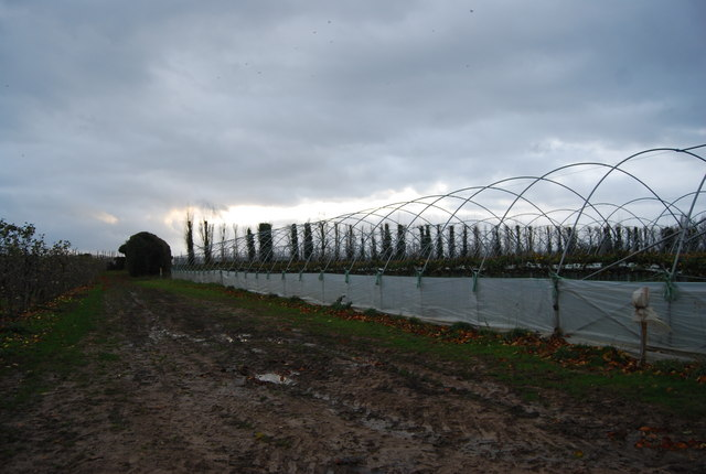 File:Polytunnels by the path to Stoneacre - geograph.org.uk - 1614203.jpg