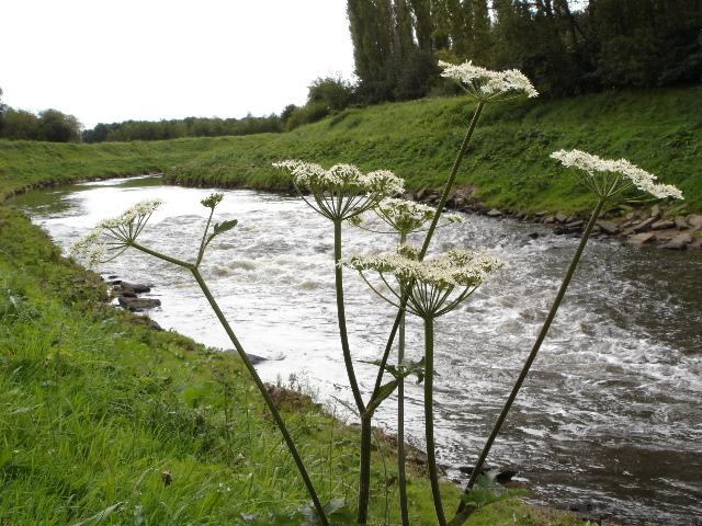 River Mersey near Chorlton Water Park - geograph.org.uk - 8560