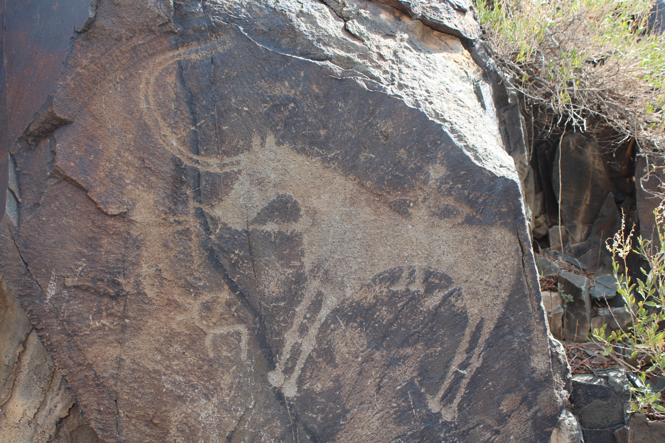 tamgaly petroglyph horse.jpg
