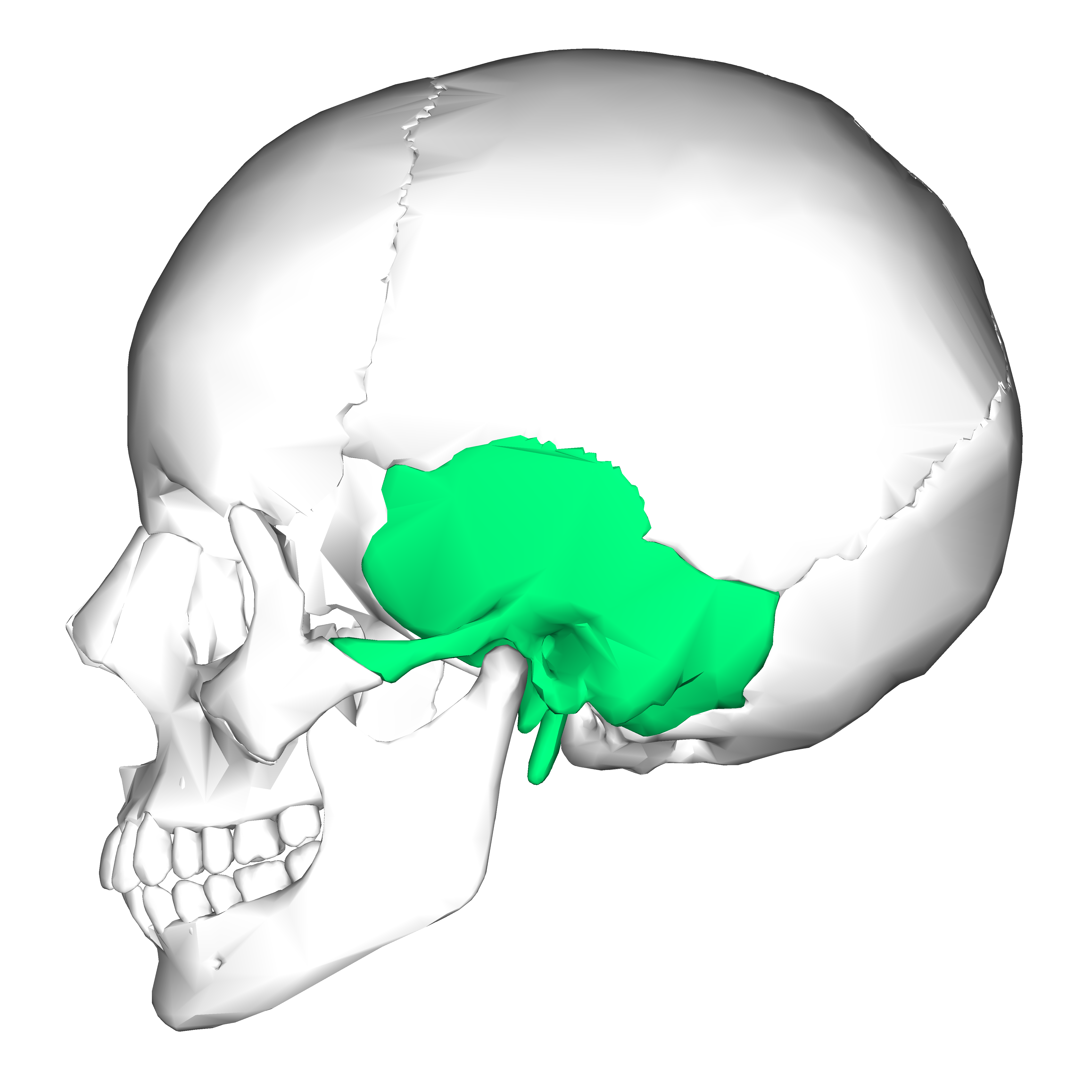 the projection of the temporal bone is the It transmits the inferior alveolar neurovascular bundle from the infratemporal fossa to the  the projection of bone medial to  fossa of the temporal bone.