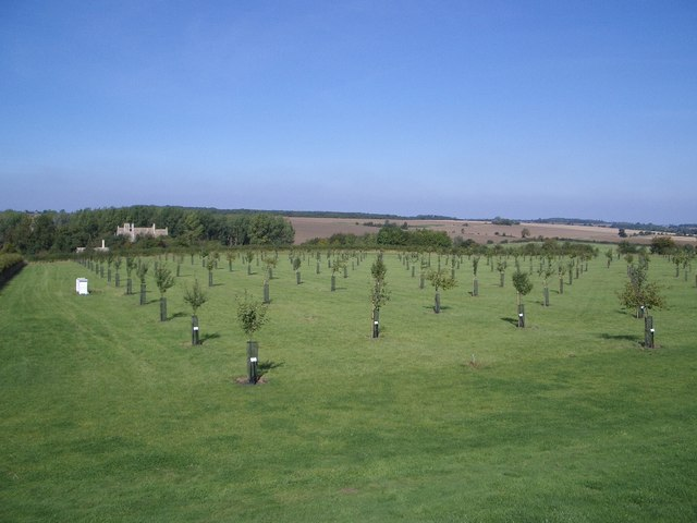 The New Orchard at Lyveden New Bield - geograph.org.uk - 324714