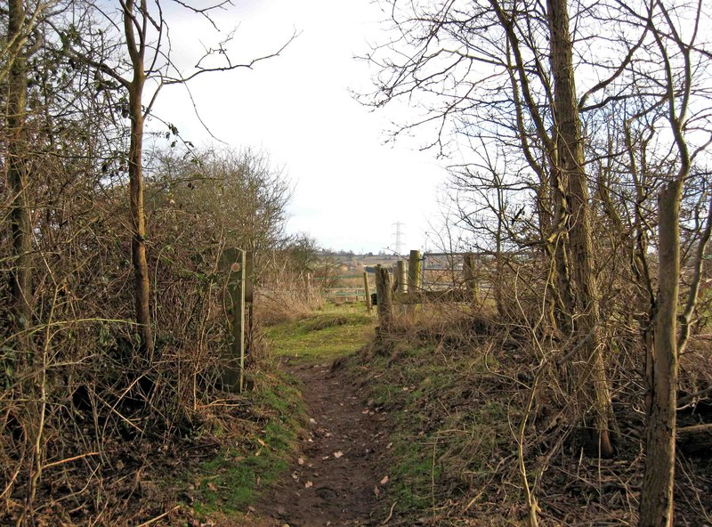 The edge of Hartlebury Common - geograph.org.uk - 1708530
