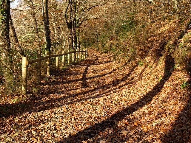 Track below Hembury Woods (7) - geograph.org.uk - 1056012