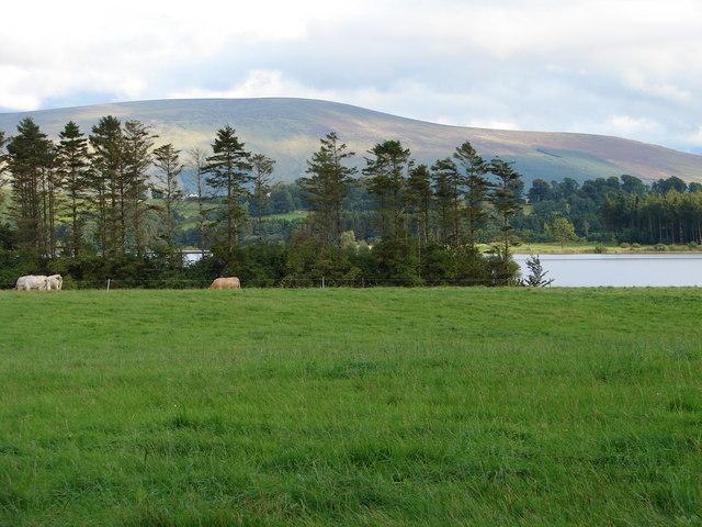 View across Pollaphuca Reservoir - geograph.org.uk - 932601
