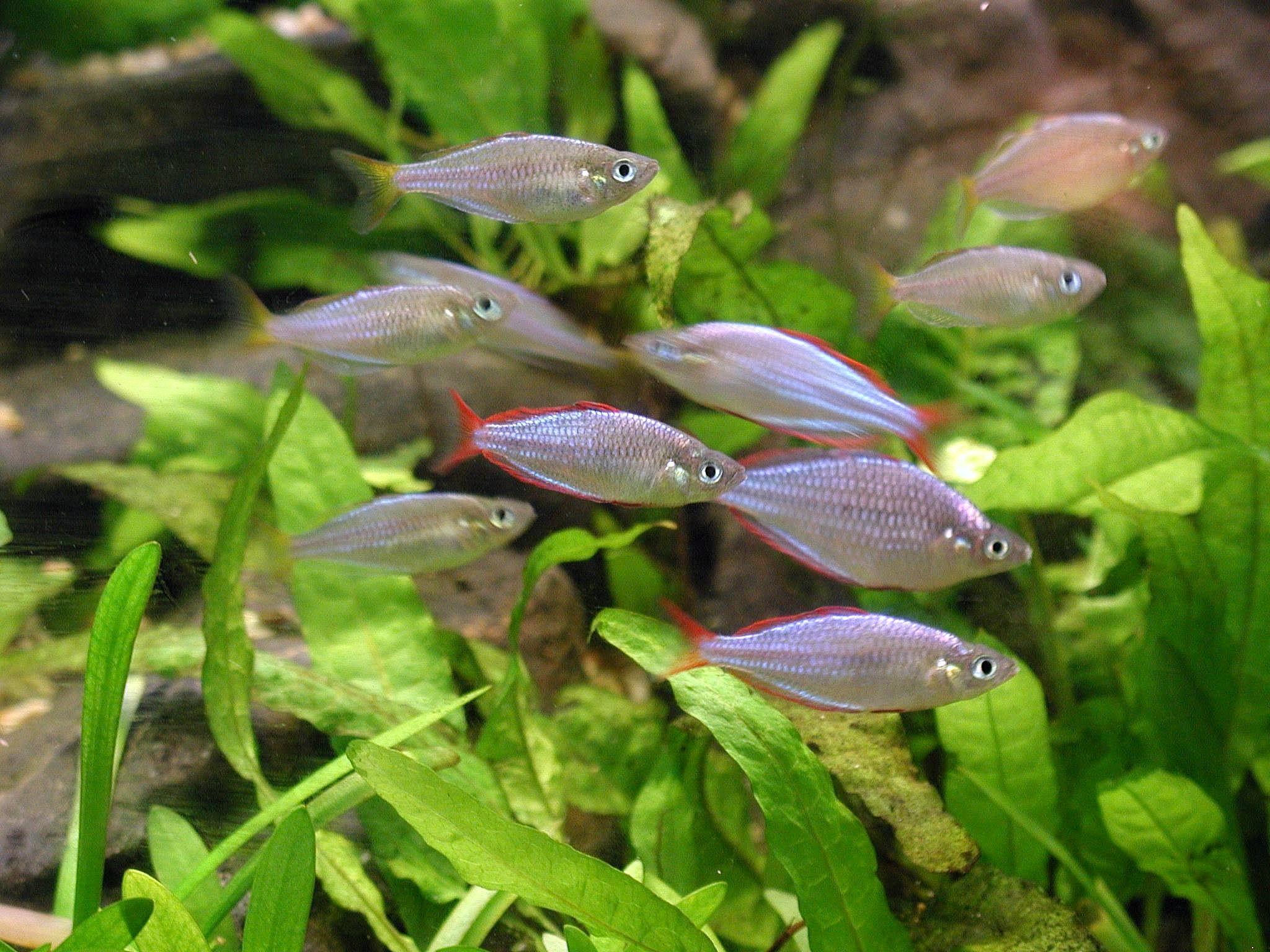 Aquarium Fish Plants File Aquarium Plants And Fish Wikimedia Commons 2017 Fish Tank Maintenance