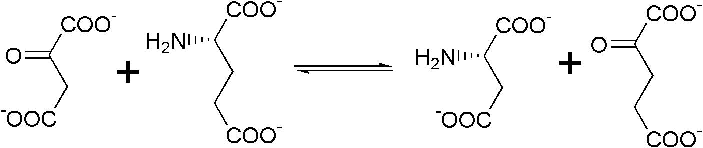 File:Aspartate transaminase rn.png - Wikimedia Commons