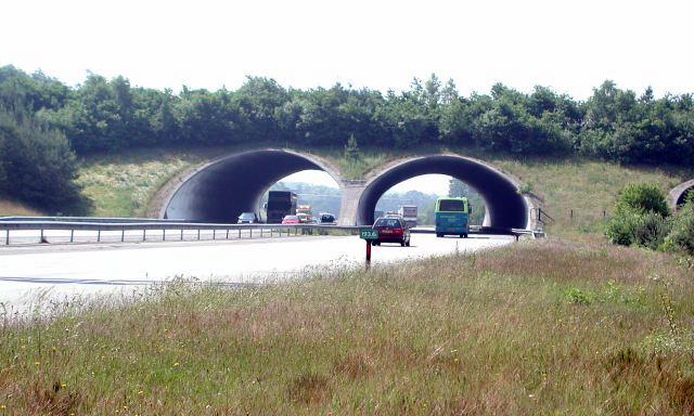 File:Cerviduct.jpg