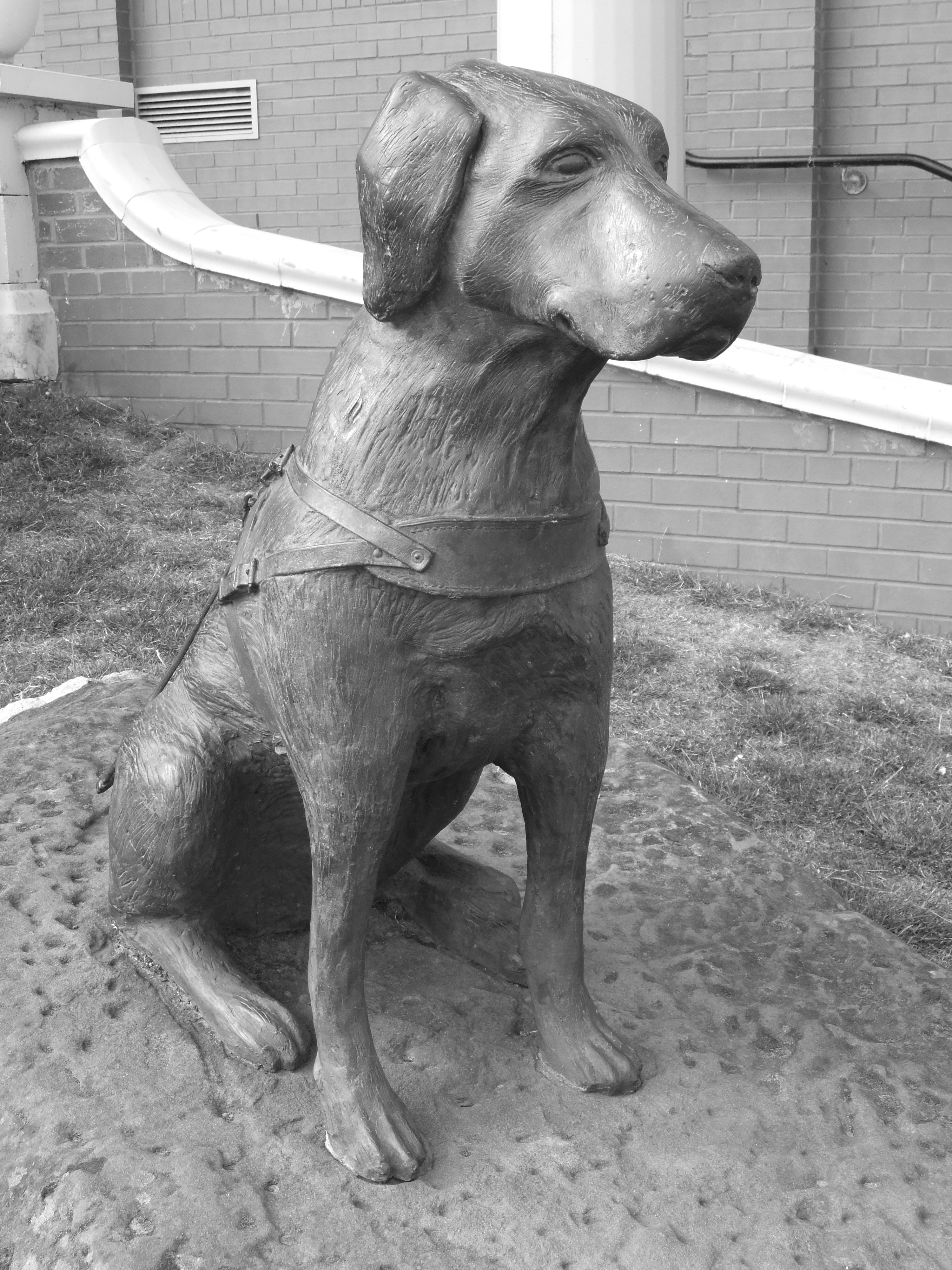 New Brighton Dog Park
