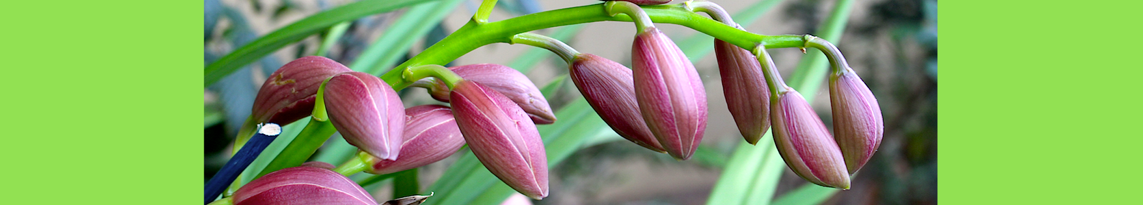Цветы для Божией Матери, ради иконы Ея Святогорской.