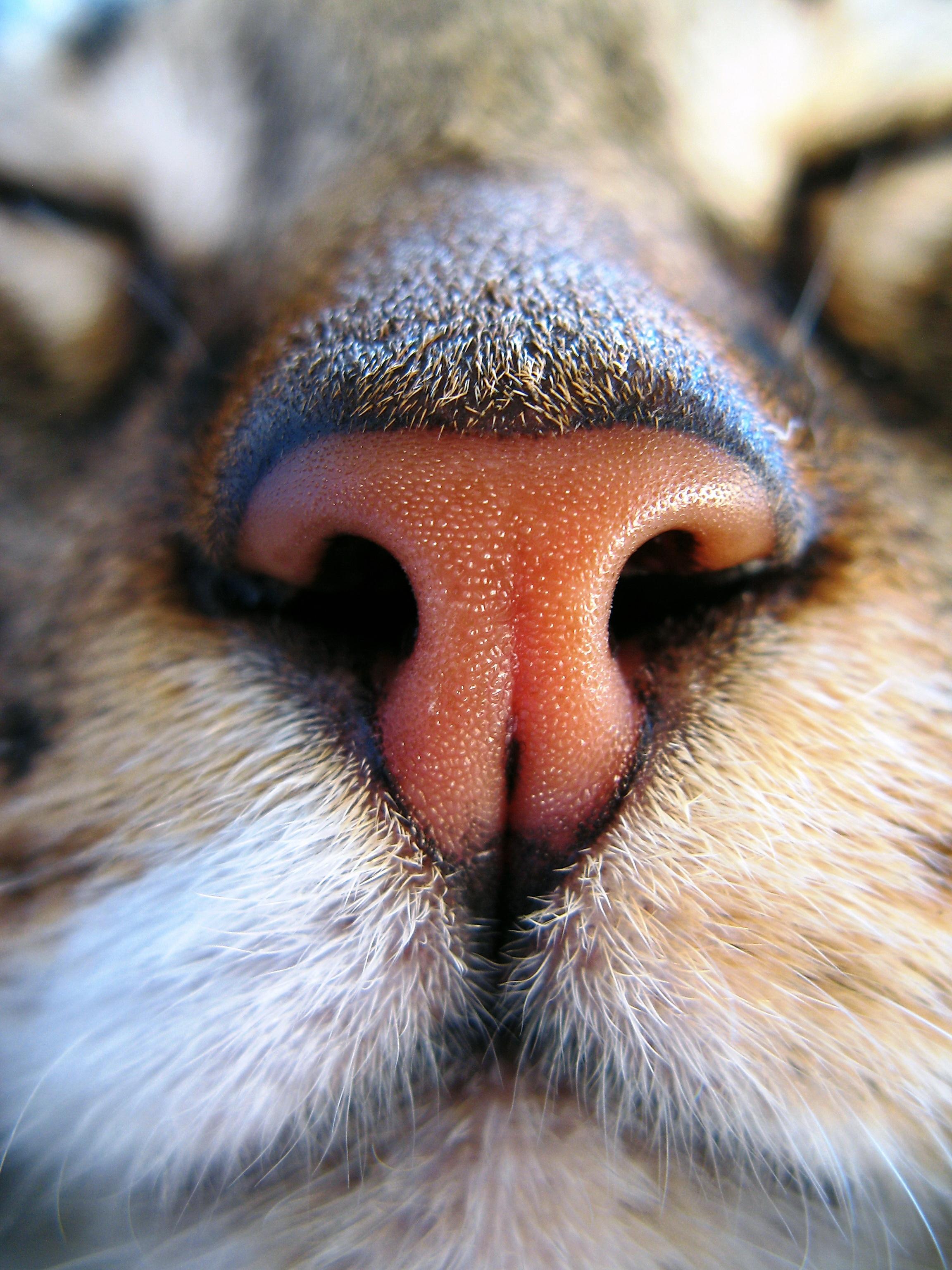 stretto bagnato micio close up