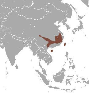 Insular mole species of mammal