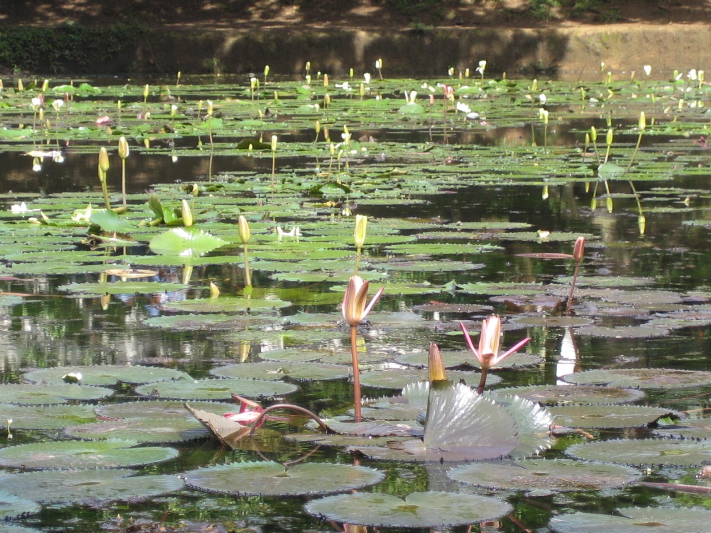 File jardin botanico plantas del lago medell for Bodas en el jardin botanico de medellin