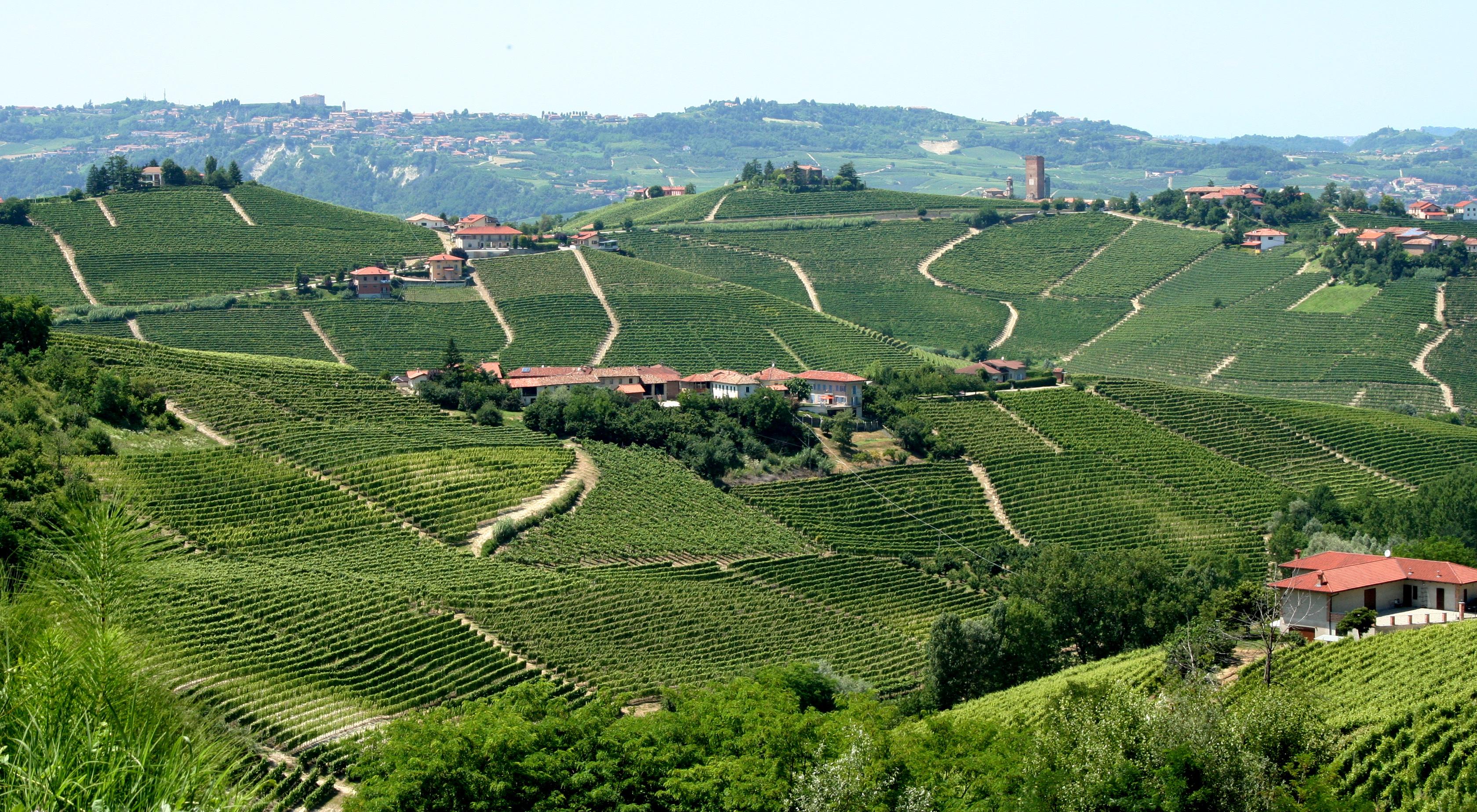 File Landscape Of Vineyards In Piemonte
