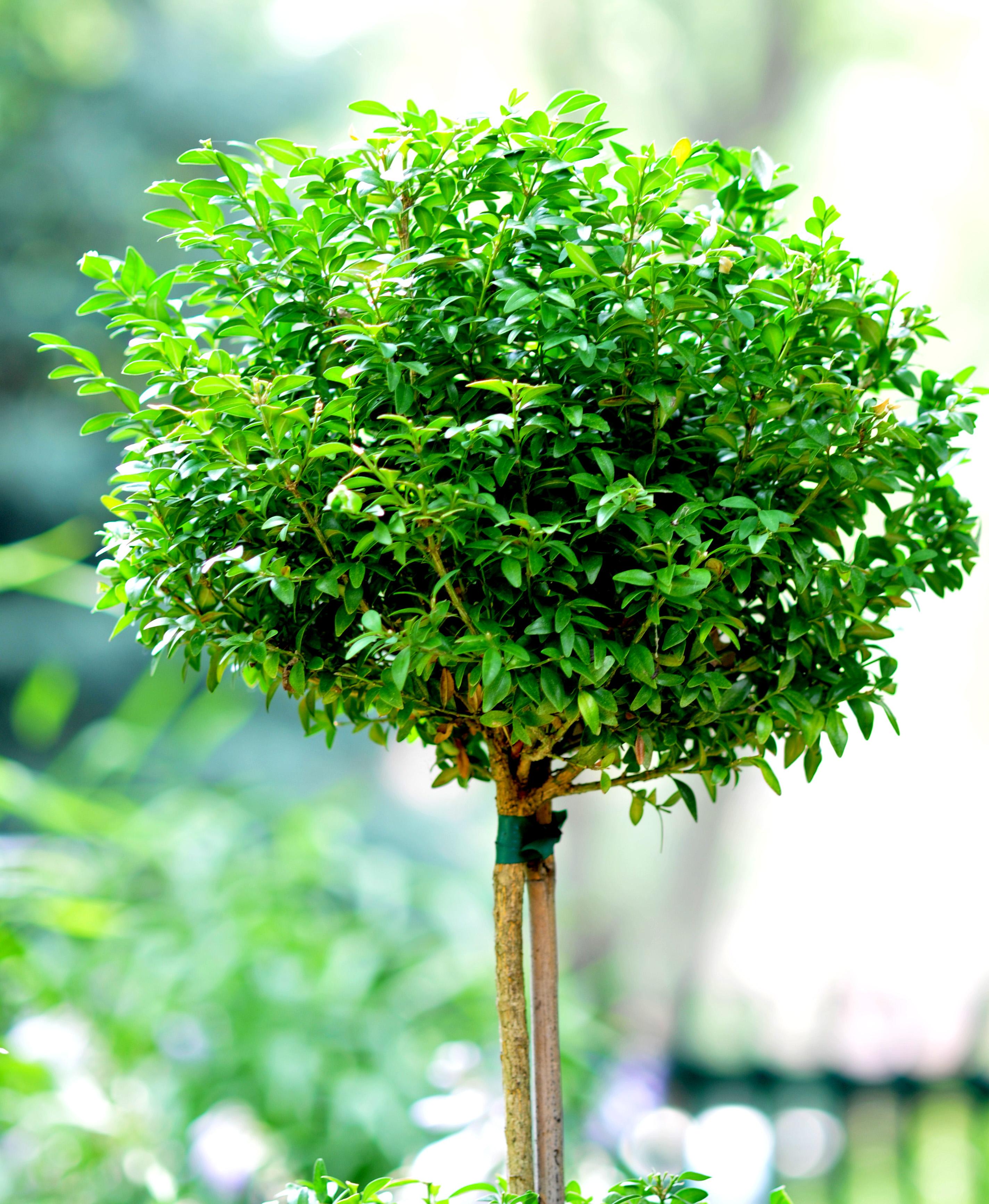 file little tree 2686037824 jpg wikimedia commons