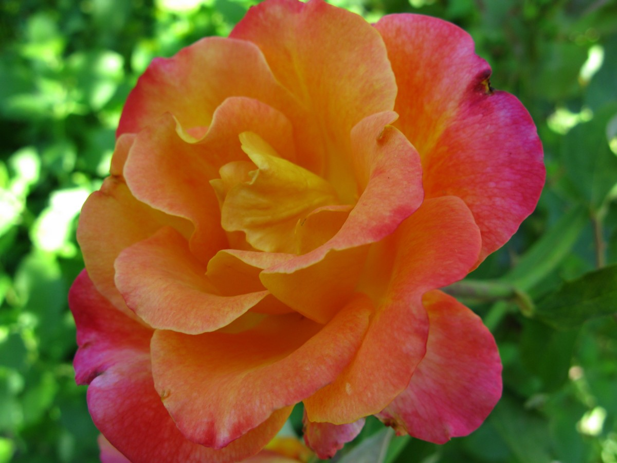 Image Result For Flowers And Roses