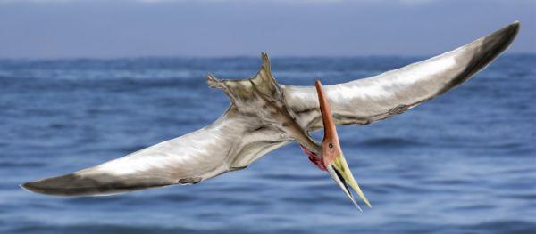 Pteranodon NT