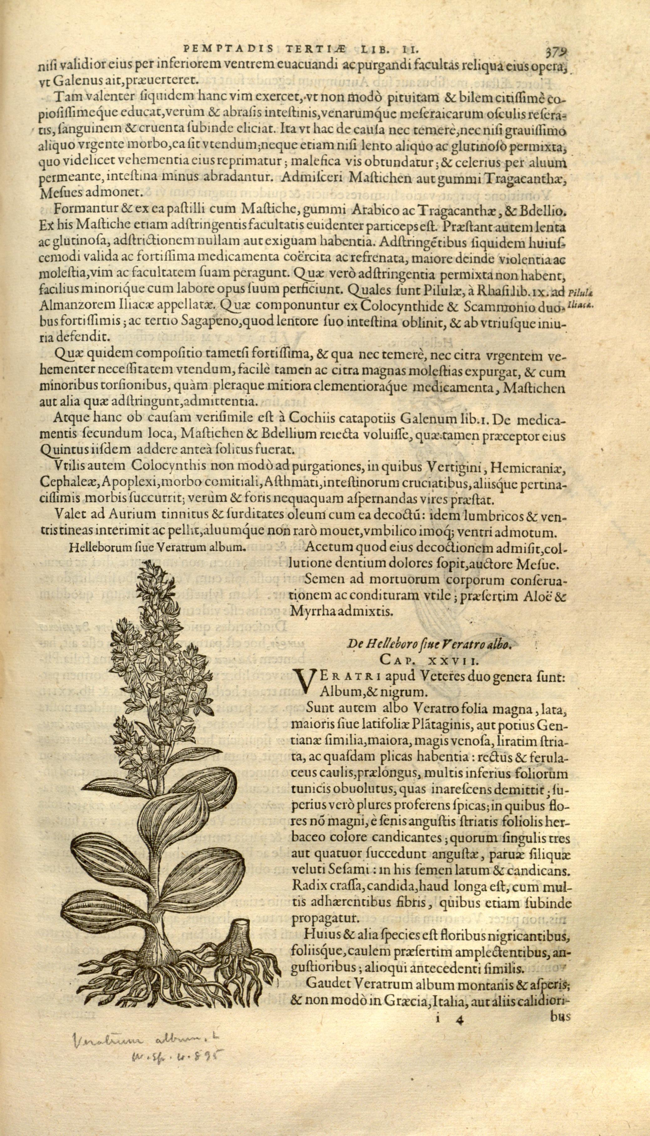 historiae pemptades sex, sive libri XXX (Page 379) BHL8100039.jpg Remberti Dodonaei ... Stirpium historiae pemptades sex, sive libri XXX. Date 1583 Source