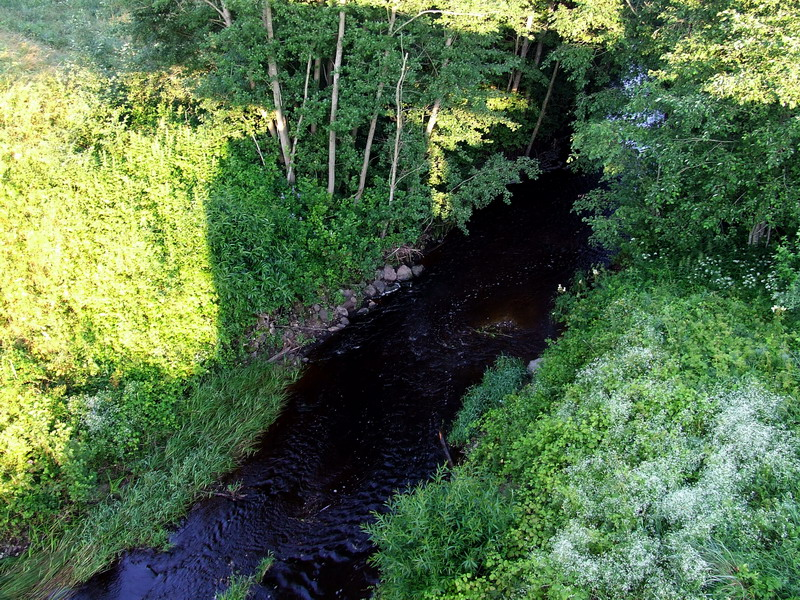 Река Шяшува у деревни Калненай