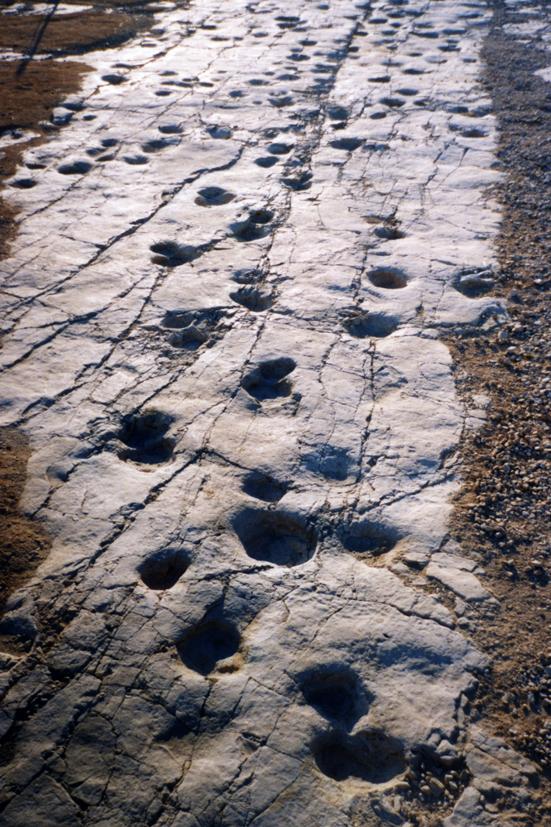Sito con orme di dinosauri di Altamura (Cretacico Superiore, Bari, Puglia) Foto Luca Bellarosa .jpg