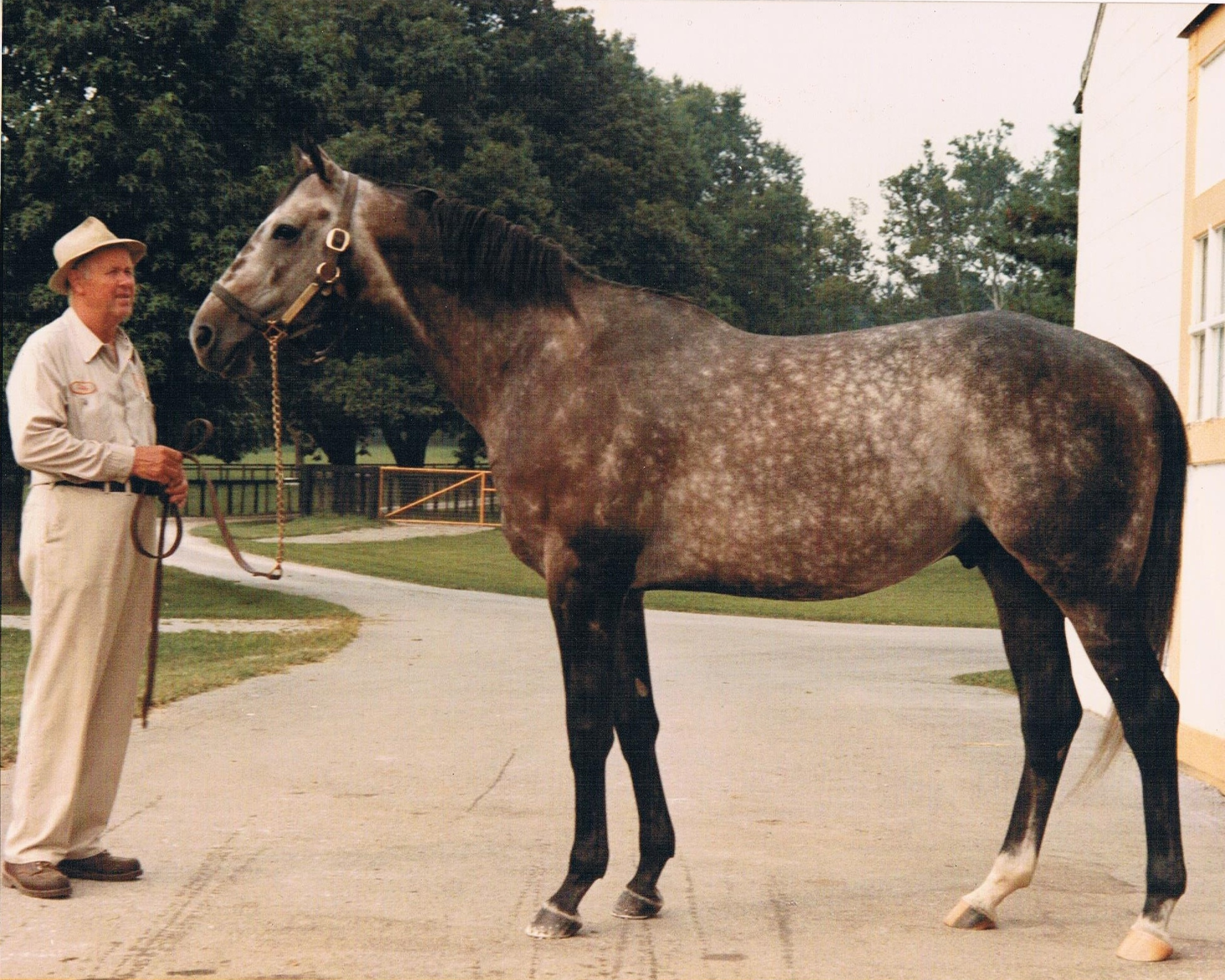 greatest racehorses ever